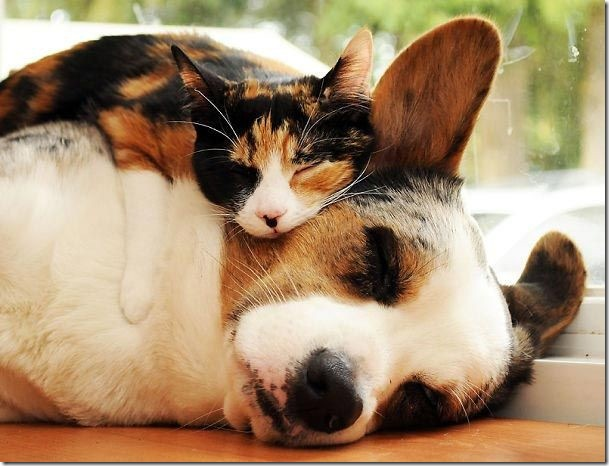 cat and dog sleep