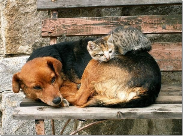 cat and dog together images