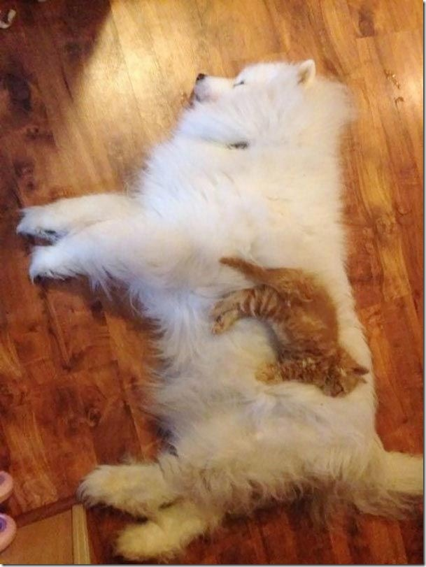 fluffy cat and dog of a photo