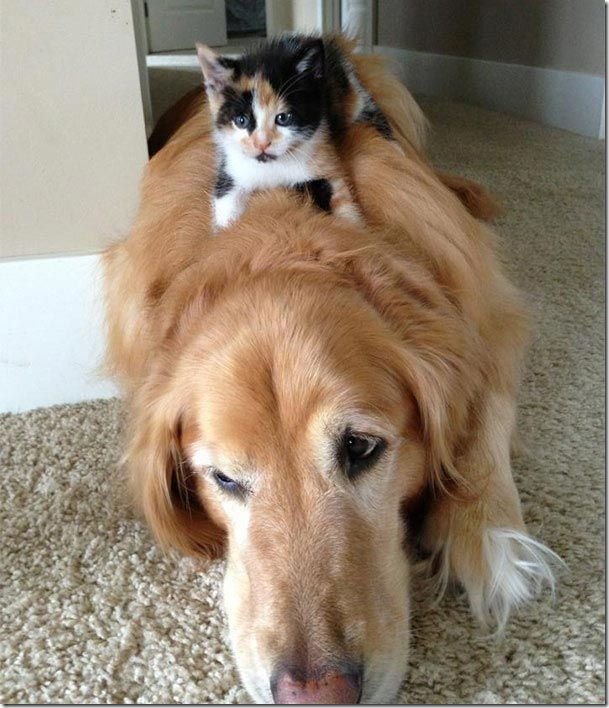 true friendship dog and cat